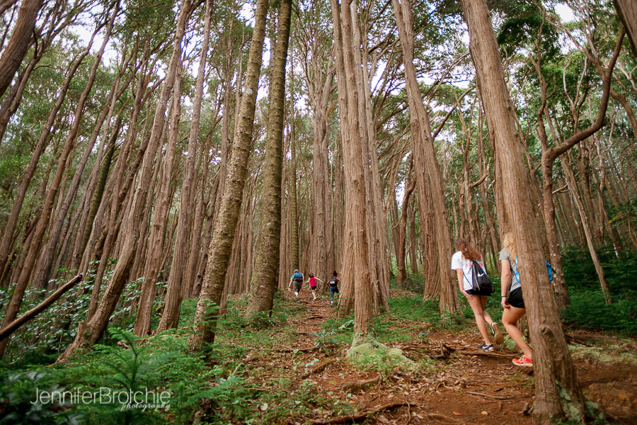 Hiking With Kids On The Judd Trail On Oahu